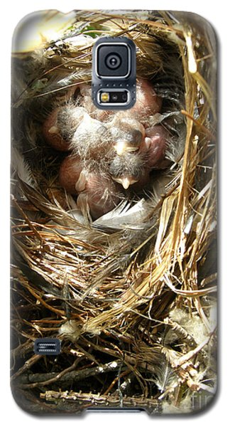 Galaxy S5 Case featuring the photograph House Wren Family by Angie Rea