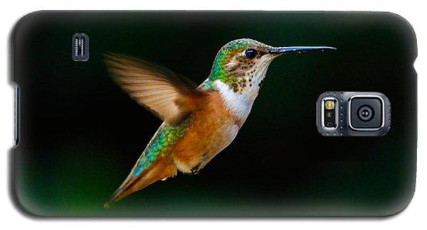 Hovering Allen's Hummingbird Galaxy S5 Case