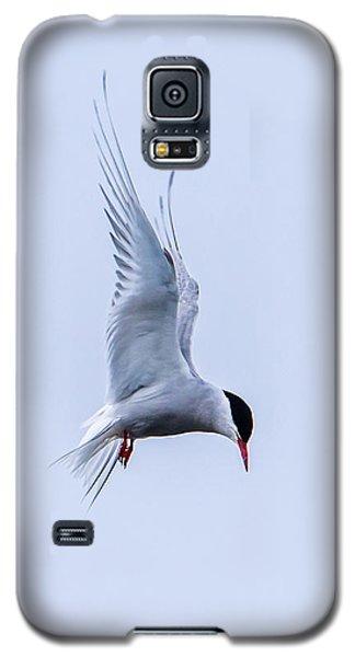 Hovering Arctic Tern Galaxy S5 Case