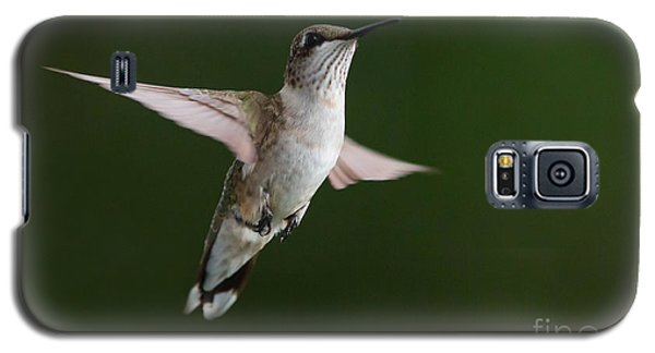 Hovering Hummer 3 Galaxy S5 Case by Kevin McCarthy