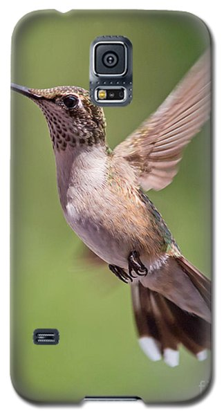 Hovering Hummer 1 Galaxy S5 Case