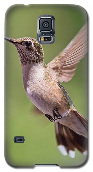 Hovering Hummer 1 Galaxy S5 Case by Kevin McCarthy