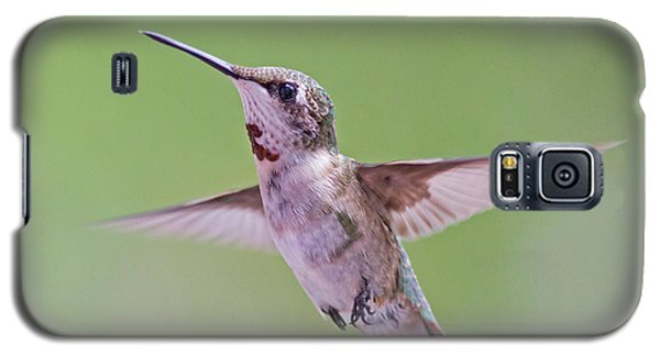 Hovering Hummingbird 5 Galaxy S5 Case by Kevin McCarthy