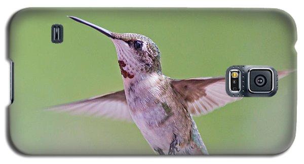 Hovering Hummingbird 5 Galaxy S5 Case