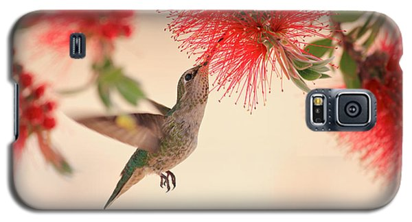 Hovering Hummingbird Galaxy S5 Case by Penny Meyers