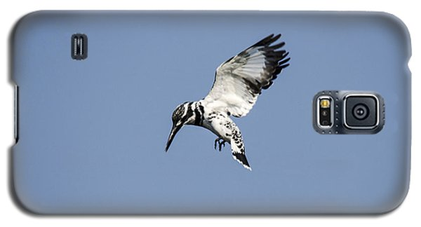 Hovering Of White Pied Kingfisher Galaxy S5 Case by Manjot Singh Sachdeva