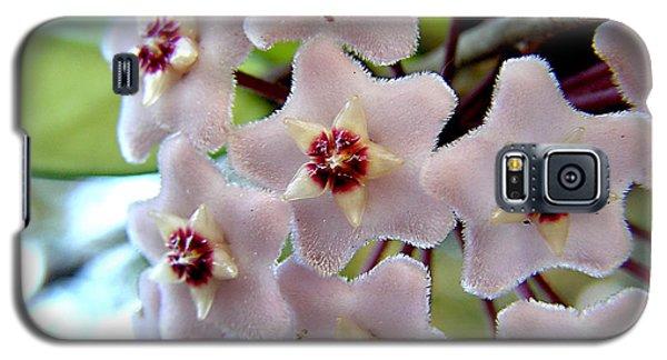 Hoya Blooms Galaxy S5 Case