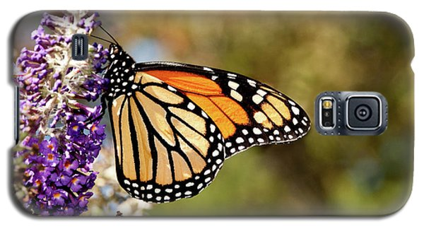 Galaxy S5 Case featuring the photograph Hues Of Autumn Monarch by Lara Ellis