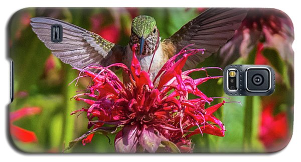 Hummingbird At Eagles Nest Galaxy S5 Case