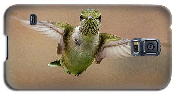 Hummingbird Galaxy S5 Case