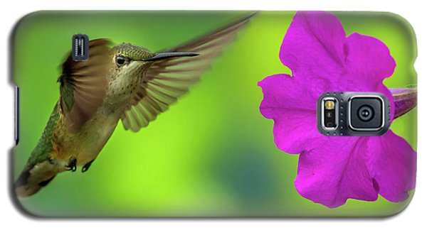 Hummingbird And Flower Galaxy S5 Case