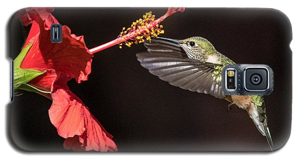 Hummingbird And Hibiiscus Galaxy S5 Case