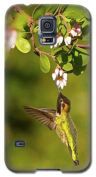 Hummingbird And Manzanita Blossom Galaxy S5 Case