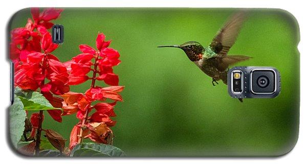 Hummingbird And Scarlet Sage Galaxy S5 Case