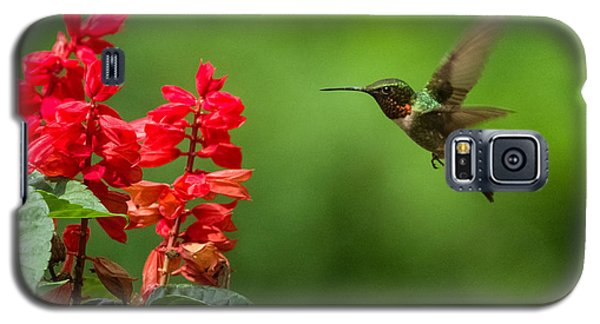 Hummingbird And Scarlet Sage Galaxy S5 Case