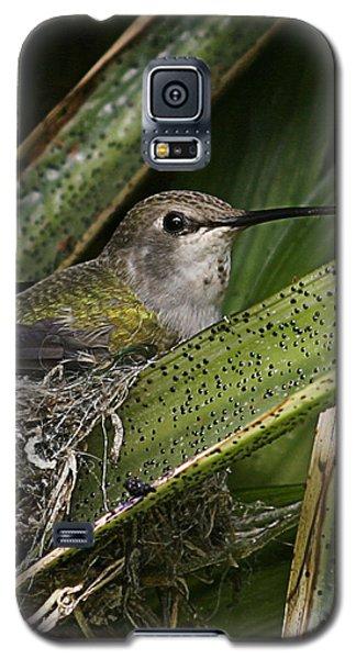 Nesting Anna's Hummingbird Galaxy S5 Case