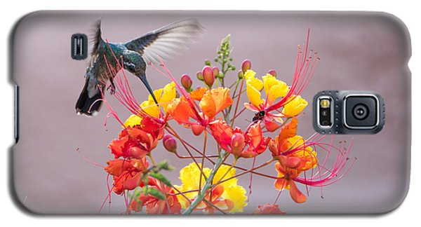 Galaxy S5 Case featuring the photograph Hummingbird At Work by Dan McManus