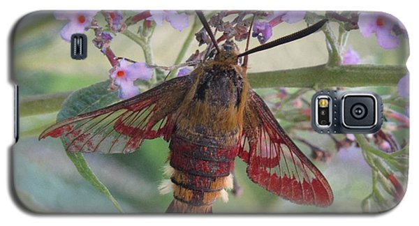 Galaxy S5 Case featuring the photograph Hummingbird Butterfly by Jeepee Aero