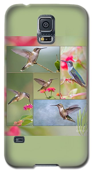 Hummingbird Collage Galaxy S5 Case by Bonnie Barry