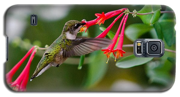 Galaxy S5 Case featuring the photograph Hummingbird Feeding by Gary Wightman