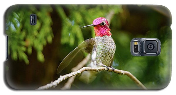 Galaxy S5 Case featuring the photograph Hummingbird Gorget by Kathy King