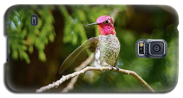 Hummingbird Gorget Galaxy S5 Case