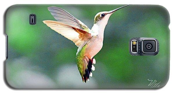 Hummingbird Hovering Galaxy S5 Case by Meta Gatschenberger