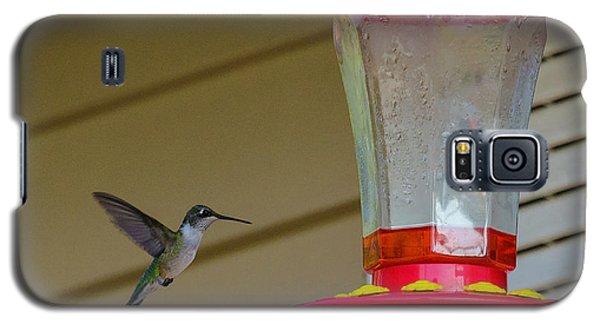 Hummingbird In Flight Galaxy S5 Case