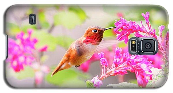 Hummingbird In Spring Galaxy S5 Case