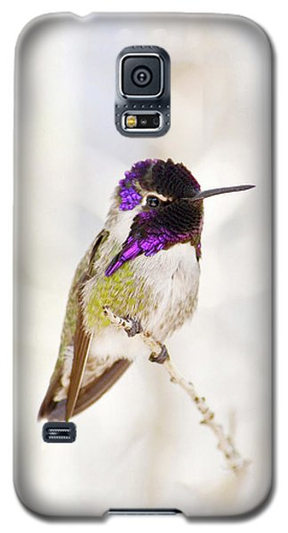 Hummingbird Larger Background Galaxy S5 Case