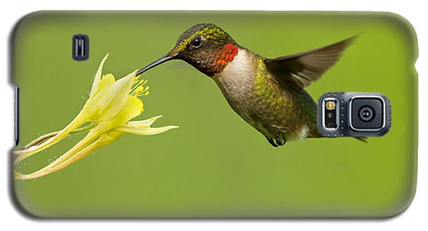 Hummingbird Galaxy S5 Case by Mircea Costina Photography