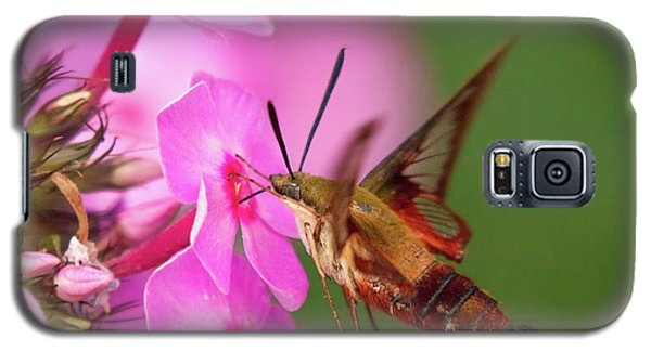 Hummingbird Moth Feeding 1 Galaxy S5 Case