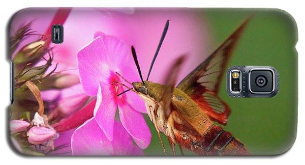 Hummingbird Moth Feeding 1 Galaxy S5 Case