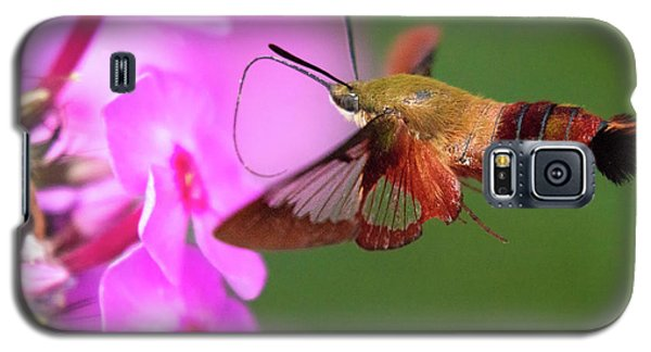 Hummingbird Moth Feeding 2 Galaxy S5 Case