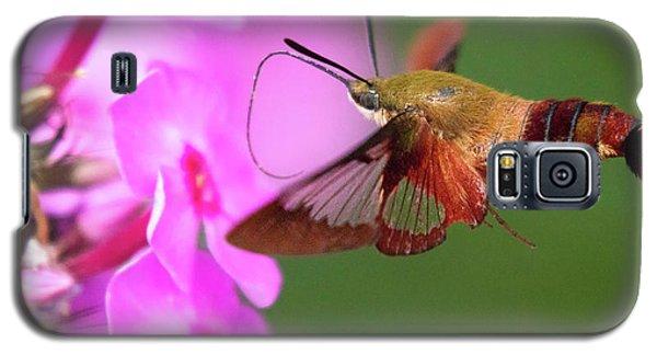 Hummingbird Moth Feeding 2 Galaxy S5 Case