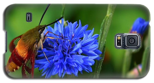 Hummingbird Moth Galaxy S5 Case by Marjorie Imbeau