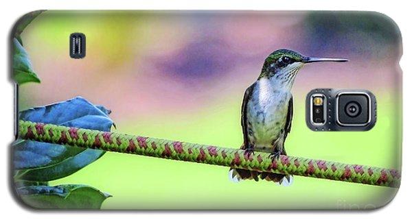 Hummingbird On Watch Galaxy S5 Case