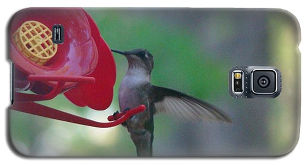 Galaxy S5 Case featuring the photograph Hummingbird  by Rand Herron