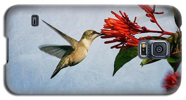 Hummingbird Red Flowers Galaxy S5 Case