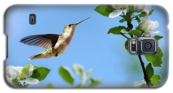 Hummingbird Springtime Galaxy S5 Case by Christina Rollo