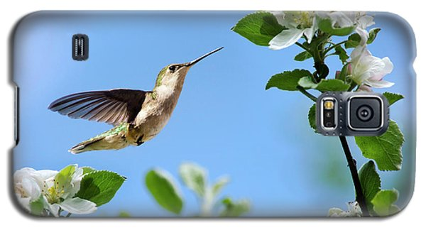 Hummingbird Springtime Galaxy S5 Case