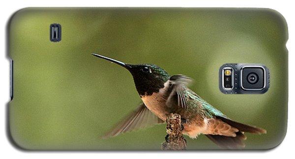 Hummingbird Take-off Galaxy S5 Case