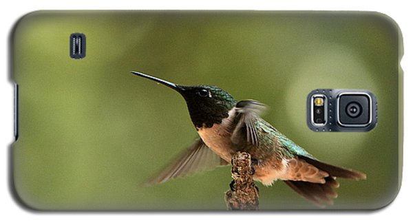 Hummingbird Take-off Galaxy S5 Case