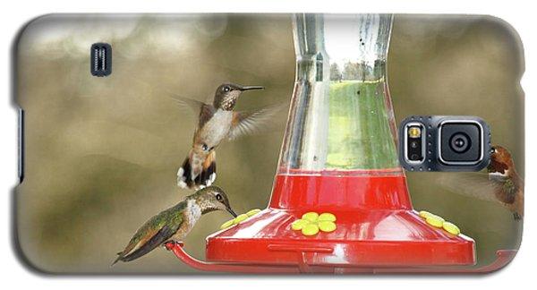 Hummingbird Trio Galaxy S5 Case