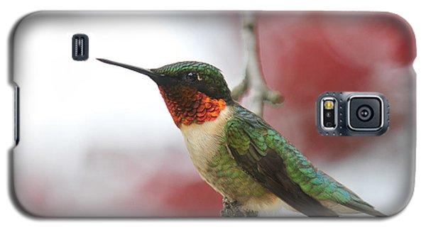 Galaxy S5 Case featuring the photograph Hummingbird Watch Tower by Lara Ellis