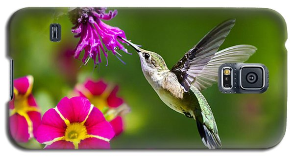 Hummingbird With Flower Galaxy S5 Case by Christina Rollo