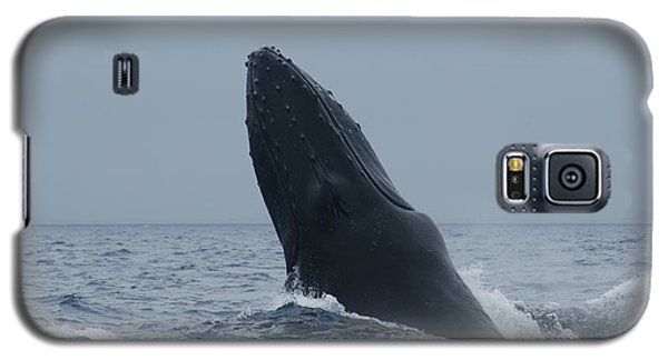 Humpback Whale Breaching Galaxy S5 Case