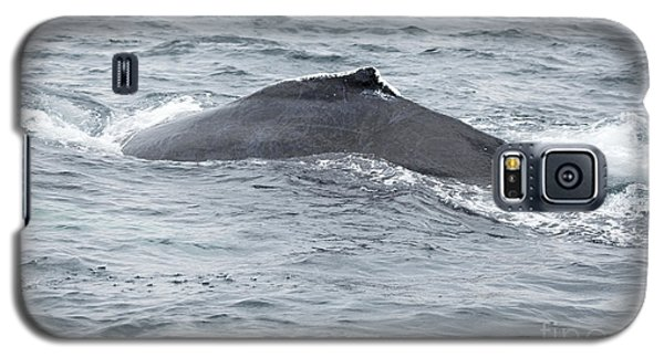 Humpback Whale In Bay Of Fundy Galaxy S5 Case