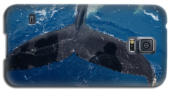 Humpback Whale Tail With Human Shadows Galaxy S5 Case by Gary Crockett