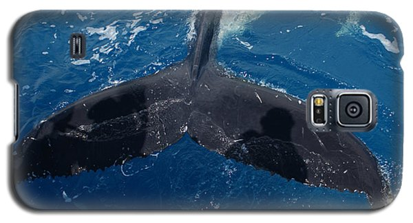 Humpback Whale Tail With Human Shadows Galaxy S5 Case
